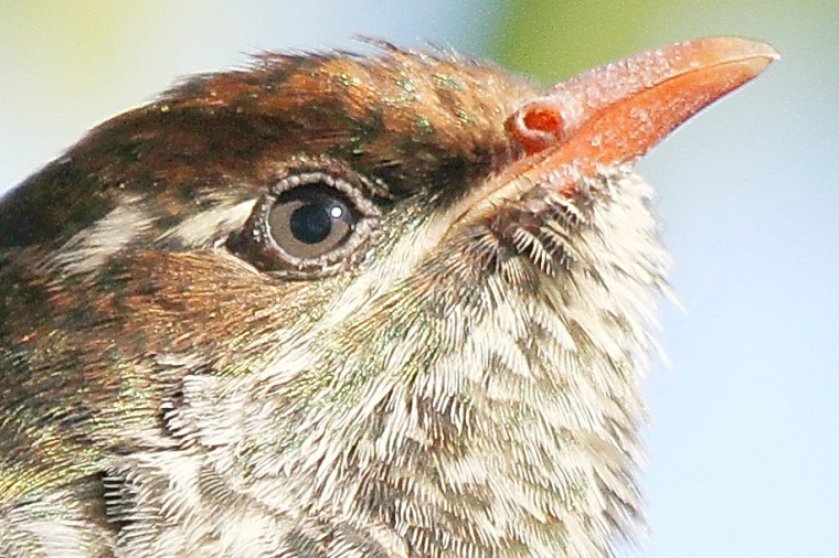 Bird ID Challenge