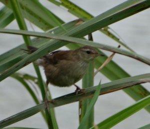 Mystery Bird No. 3