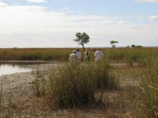 Exploring the wetlands