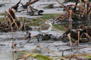 Mystery Wader