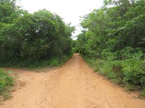 Walk along the bush on the right to find the path entrance.