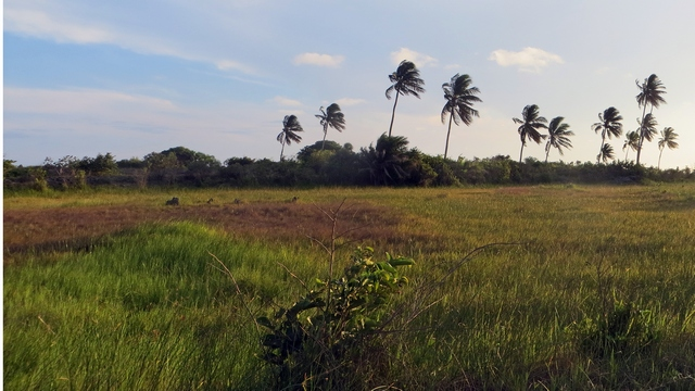 Just outside Beira