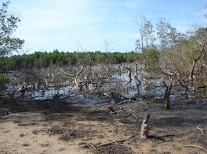 Mangroves right next to the road
