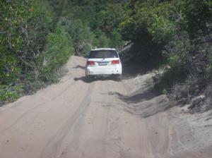 Thick sand tracks through the mangroves