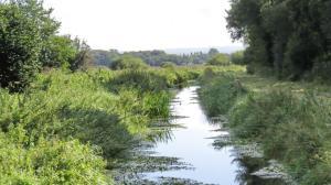 Ham Wall canal