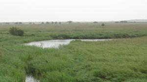 Minsmere Marshes