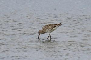 Mystery - Wader