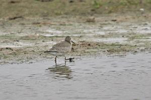Mystery Wader 3