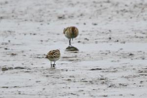 Mystery Waders 2