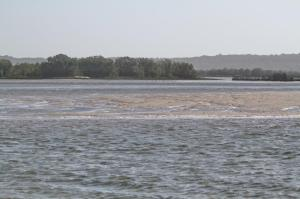 On way to the tern roost from one sandbank to the next