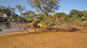 Fallen Tree in front of TEBA Lodge