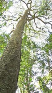 Yellowwood Forest