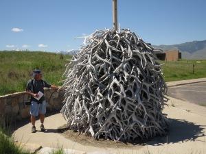 Elk antlers shed each year