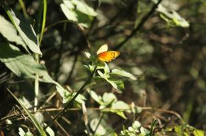 Butterfly - PB