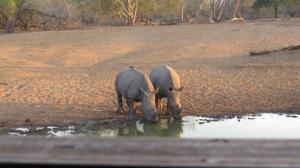 Rhino Twins