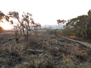 Pathway at Oribi Camp