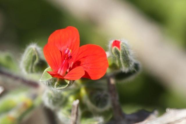 Flower - red
