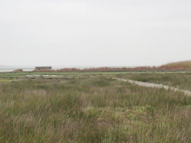 Geelbek Hide on a gloomy and windy day.