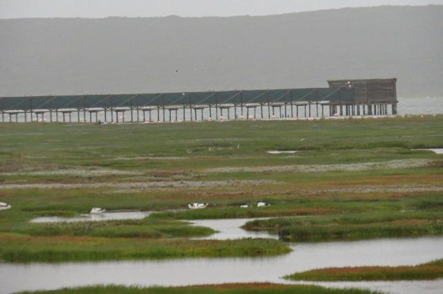 Geelbek other hide with Avocets and Greenshanks in the wetlands