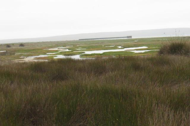 Geelbek Wetland