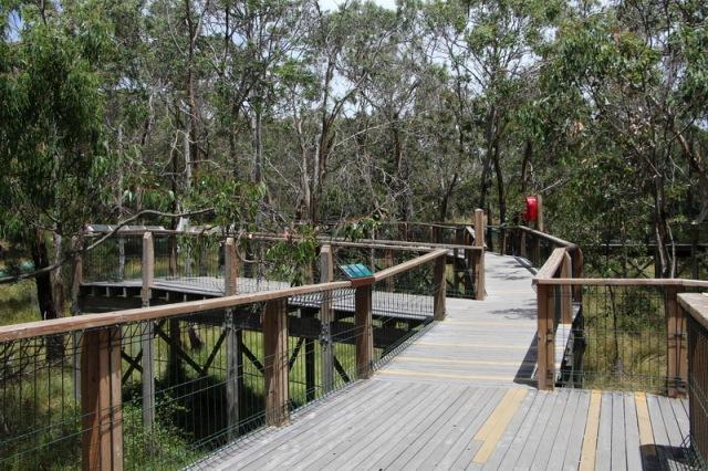 Koala Boardwalk
