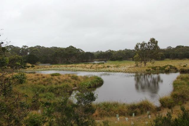 Koala wetland area from the boardwalk