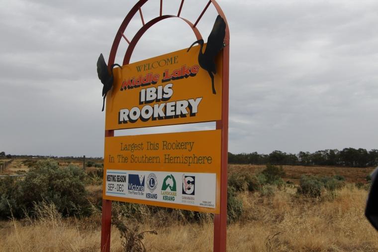 Ibis Rookery